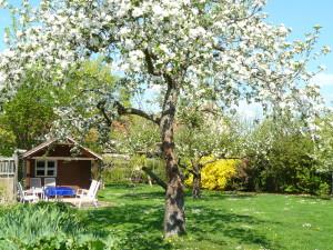 Garten Frühjahr 2